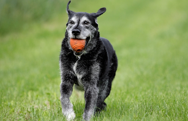 A New Probiotic for Dogs Has Hit the Shelves