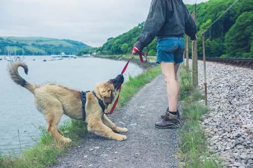 Dog Disobedience