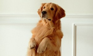 DogTV Helps Relieve Separation Anxiety in Dogs