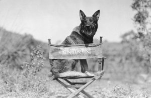 Dogs that are the Biggest Movie Stars