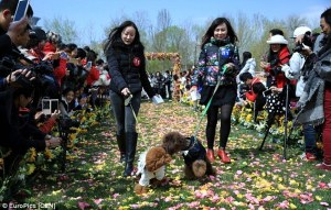Growth of Pet Industry in China Proven By Largest Dog Wedding Ever