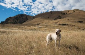 Hiking With a Dog Here's What You Need to Know