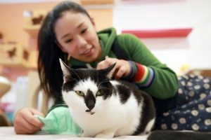 Low Birthrate in China and Taiwan Spawning a Booming Pet Business
