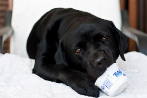 Must Have Dog Supplies Every Dog Owner Should Have