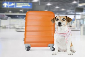 New Device Lets Dog Owners Monitor Their Pets During Flights