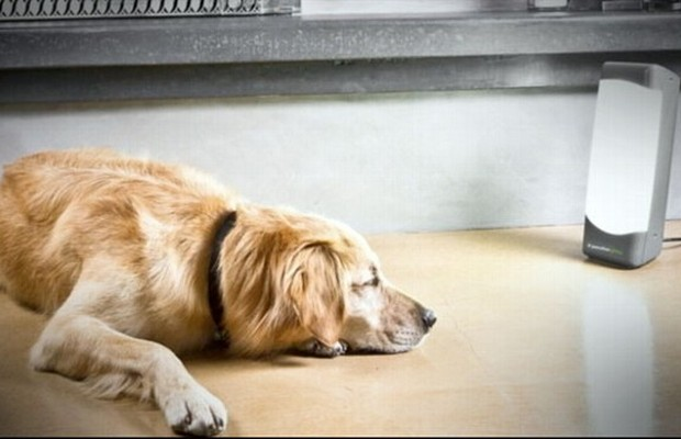 Sol Box Helps Dogs Who Suffer From Seasonal Affective Disorder