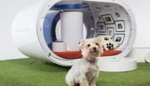 Future Dog Technology that Every Pet Owner Will Want