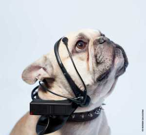How Future Dog Technology Will Affect Pet Owners