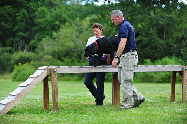 How to Start a Dog Training Business