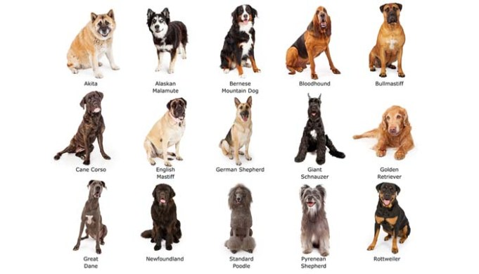 How to Tell What Breed Is My Dog