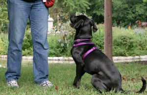 How to Write a Dog Training Business Plan