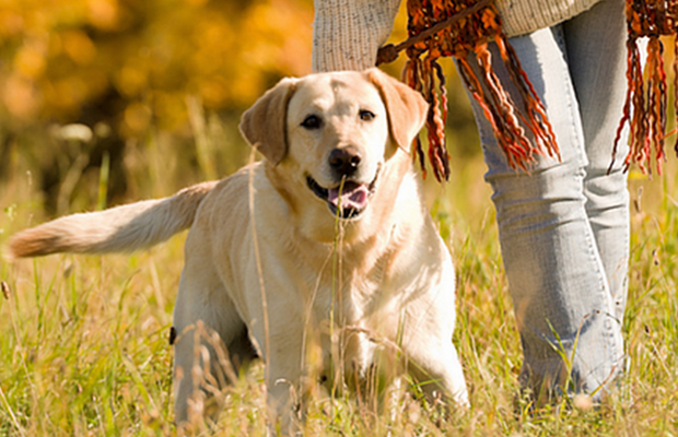 New App Matches Shelter Dogs with People Looking for a Walking Buddy