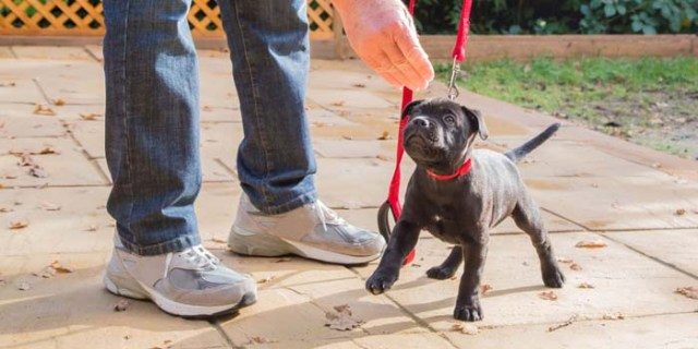 Puppy training tips and correcting problems