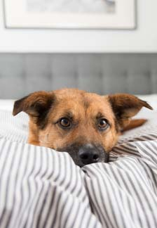 The What and Why of A Good Night's Sleep for your Dog