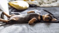 Types of Dog Bedding: Mats, Beds, Pillows and Sofas  Top ...