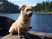 A Basic Guide to Hiking with Dogs