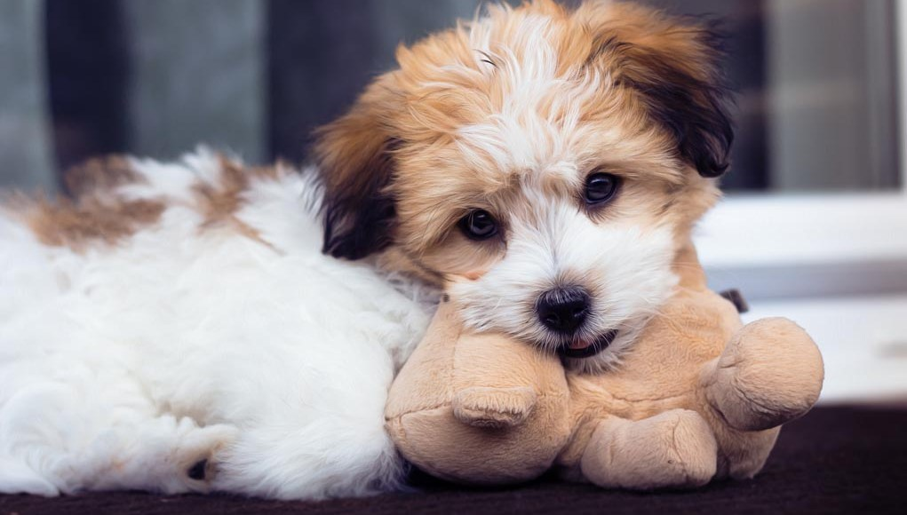 Adopting a Puppy? You Will Need These Puppy Training Supplies