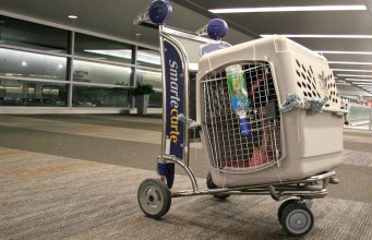 Airline Approved Dog Crates and Carriers