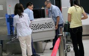 Flying With Dogs: Airline Approved Dog Crates and Carriers