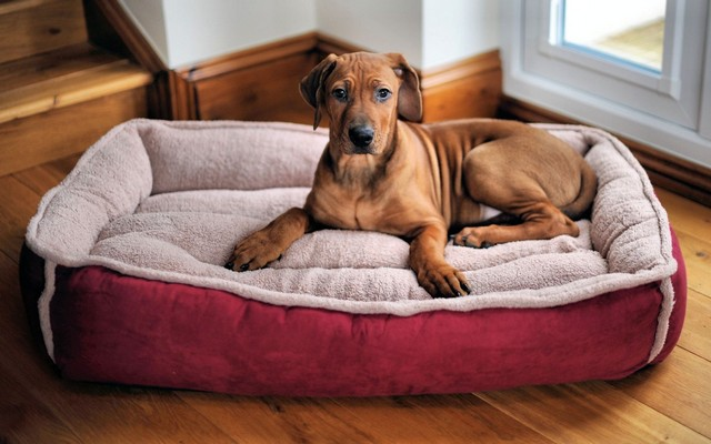 Big Lots Adds a New Line of Dog Products From the AKC to Their Shelves