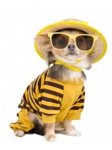 Dog Clothing Business Ideas