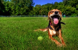 How to Prepare Your Dog for Summer