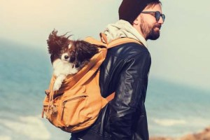 Pros and Cons of Dog Carrier Backpack
