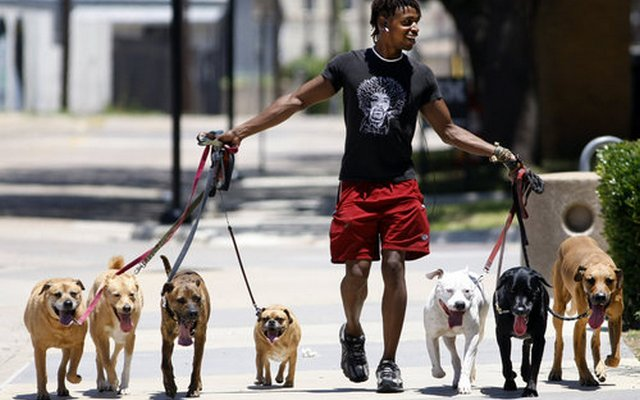This Small Dog Walking Gig Turned Into an Elite Business in New York City