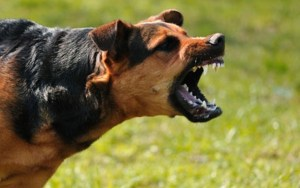 Two New Jersey Lawmakers Are Looking to Tighten Laws for Larger Breeds