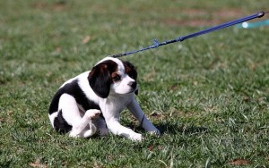 You Will Need These Puppy Training Supplies