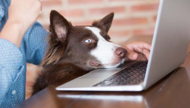online dog grooming courses