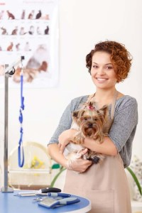 professional dog groomer with a pet
