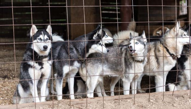 How to Start a Dog Breeding Business 101