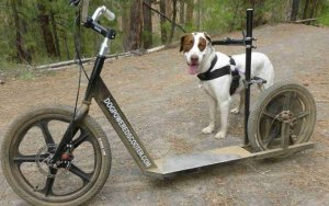 Dog Powered Scooters are Ideal for High-Energy Pets