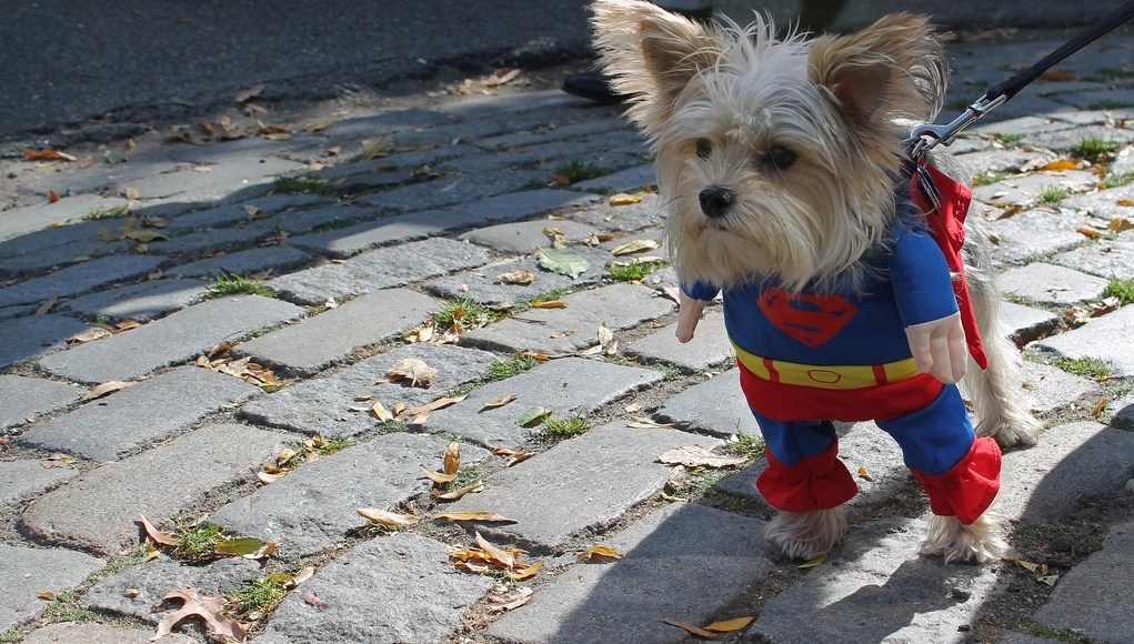 How to Dress Your Dog and Avoid Embarassment