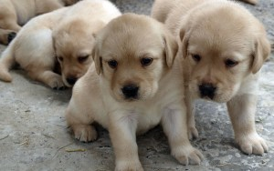 How to Write a Dog Breeding Business Plan