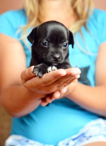 Launch your dog breeding business