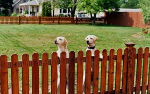 Pros & Cons of Wireless Dog Containment Systems