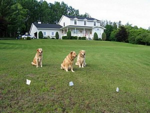 The Latest Invisible Fence Technology is Available Throughout Canada