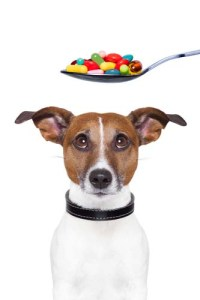 Giving pet supplements for dogs