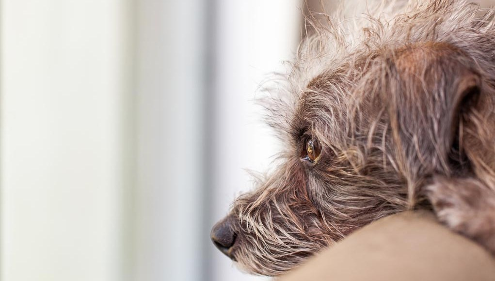 How I Help My Dog Deal With Separation Anxiety