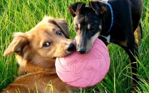 How to Start a Dog Boarding Business