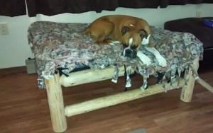 Responsible Dog Breeding