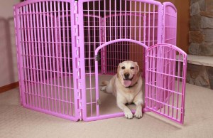 Safe Playtime - Why You Should Consider a Pet Playpen for Dogs