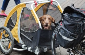 Still Summer - Hit the Road with a Doggy Trailer