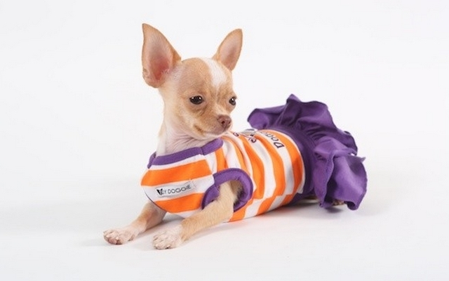 The Fashion Institute of Technology Brings Dog Fashion Into Their Curriculum1
