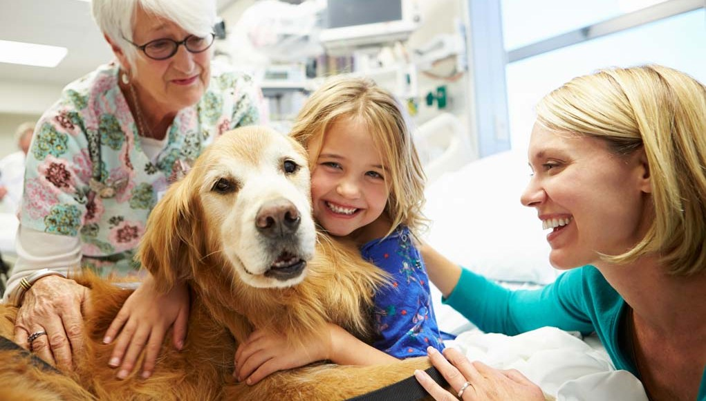 Therapy Dog Training - How To Get Your Dog Certified