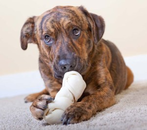 What Dog Product Related Issues Do Vets See Most Often
