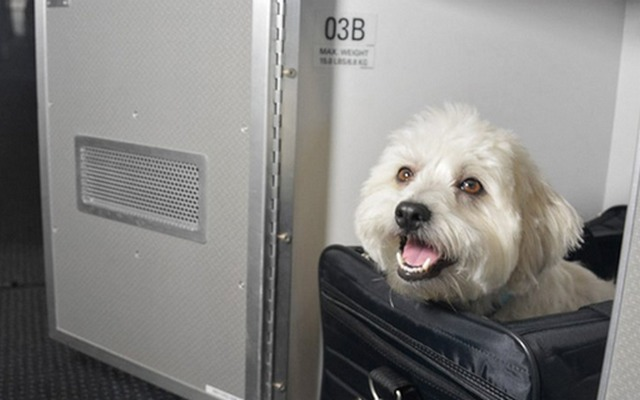 American Airlines Offers Luxe Pet Cabins