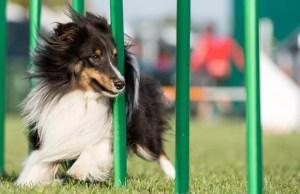Best Dog Agility Equipment Kit